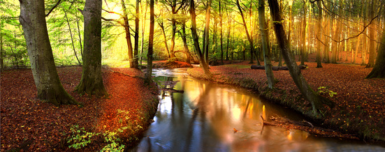 musique relaxation nature foret